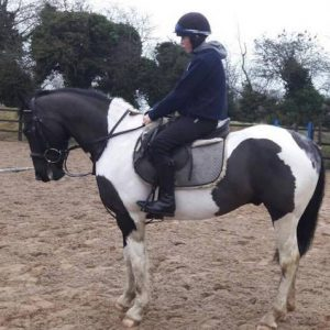 16.1hh 5yr Old