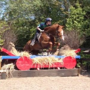 Fabulous 16.1hh All Rounder