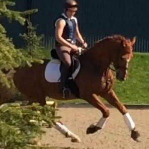 Fantastic Dressage horse