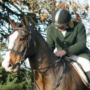 Experienced Irish Fieldmasters Horse
