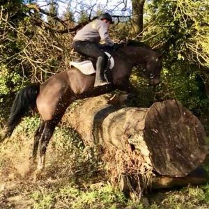 Fabulous 6yr Old Mare All