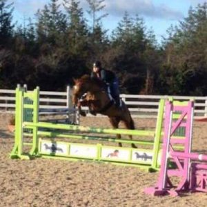 Lovely 12yr Old 16.1hh ISH All-rounder for sale