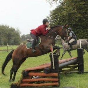Rounder 8yr Old mare