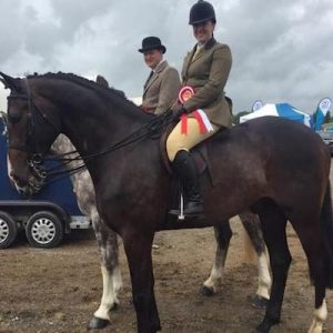 Competition Horse for sale