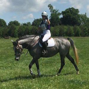 Superb Irish Sports Horse Riding Club