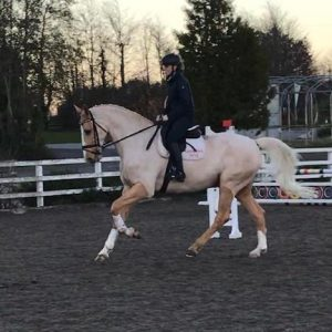 Stunning Dressage Palomino competing at advanced medium
