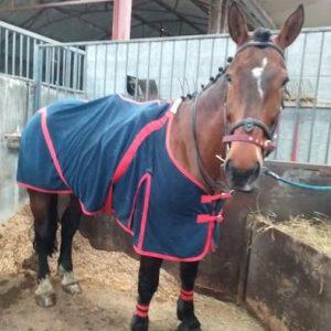 Experienced Irish Hunt Horse