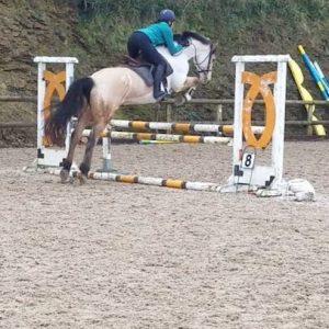 Super dun 16hh 5yr old mare