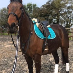 Top Young Event Horse
