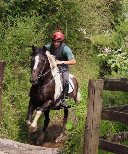 17hh 5yr Old All-Rounder