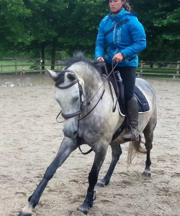 Horses For Sale - Ireland