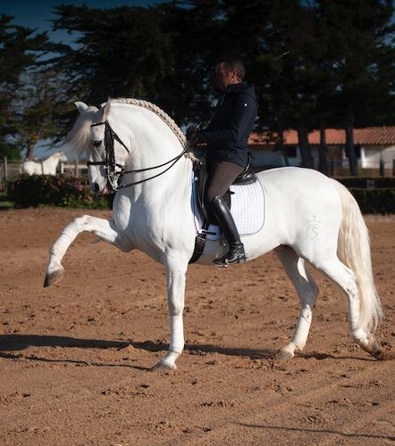 Olgazan Spanish PRE Stallion