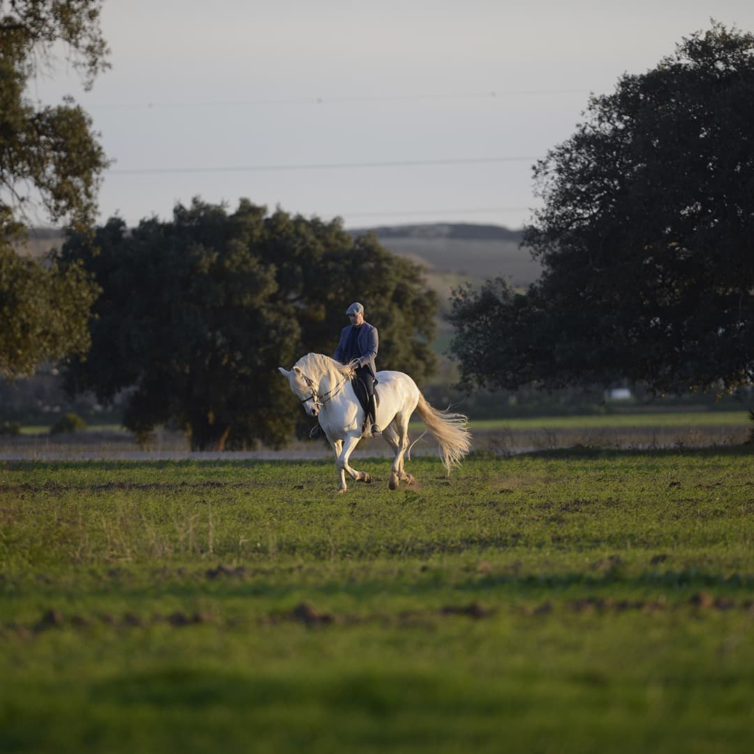 Olgazan Spanish PRE Stallion 5