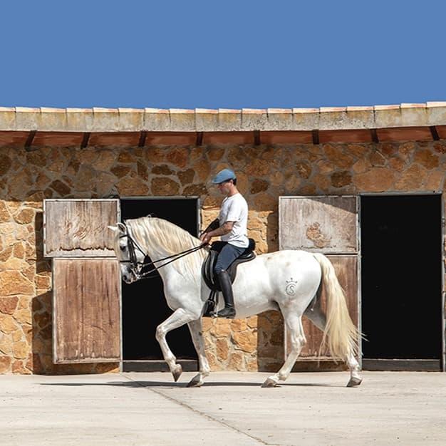 Olgazan Spanish PRE Stallion 7