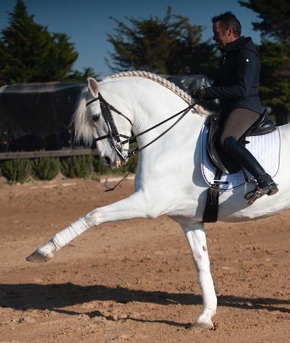 Olgazan Spanish PRE Stallion 10