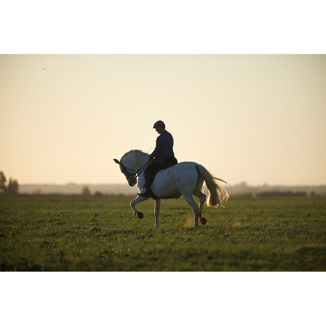 Olgazan Spanish PRE Stallion 9