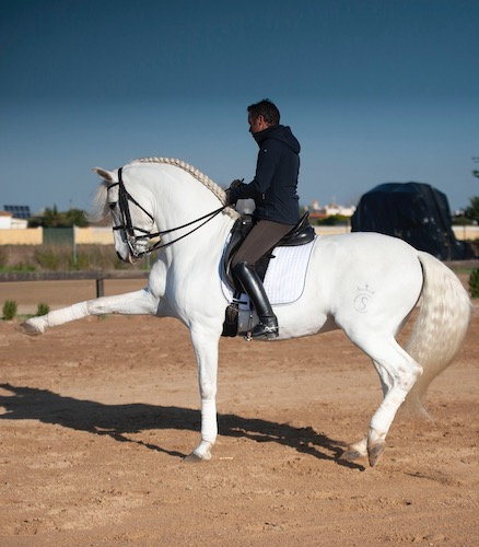 Olgazan Spanish PRE Stallion 2