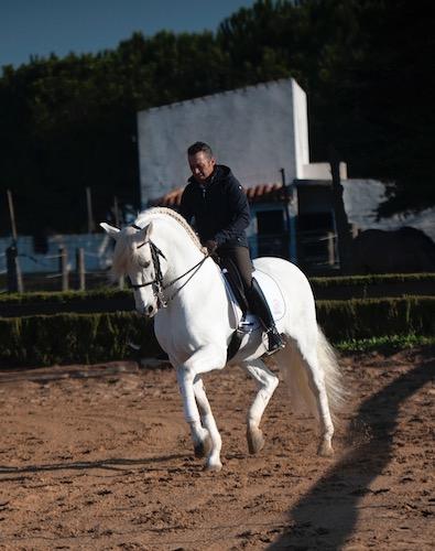 Olgazan Spanish PRE Stallion 3