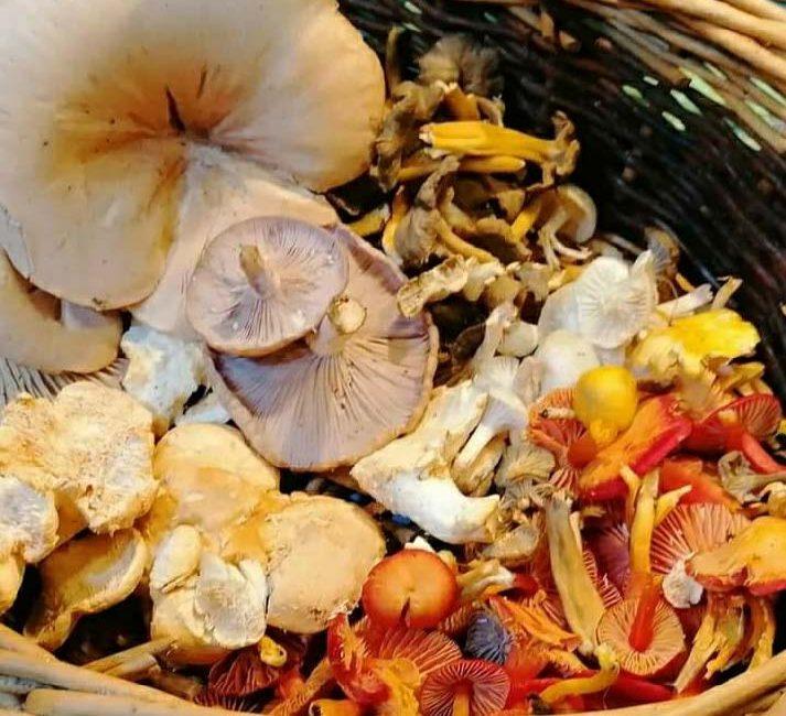 Mushroom_Page_6