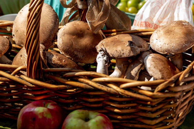 All-Inclusive Mushroom Foraging/Mycology Group Holidays
