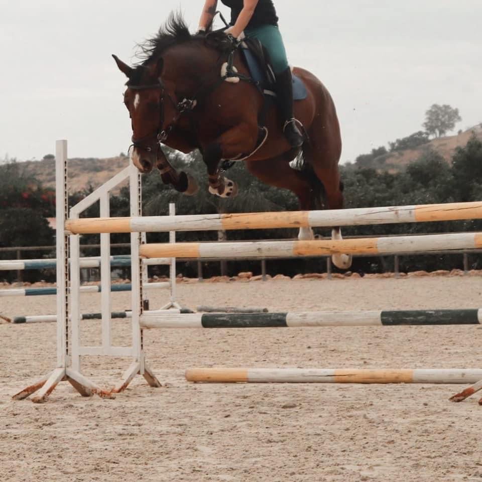 7yo-Quality-16.3hh-SJEventer