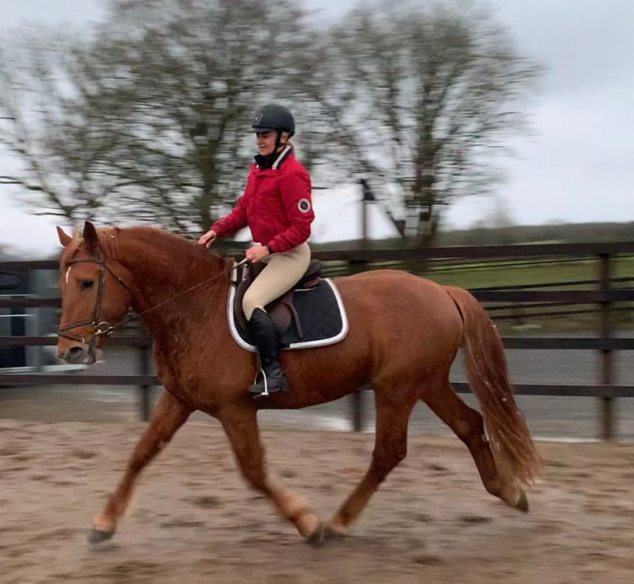 Superb RID Approved Stallion 1