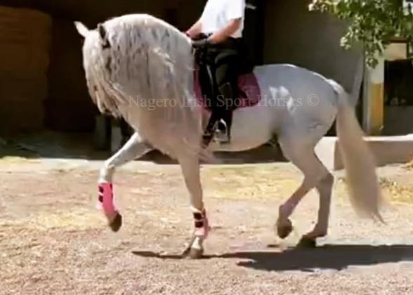Just OMG!!! White Unicorn 🦄 5