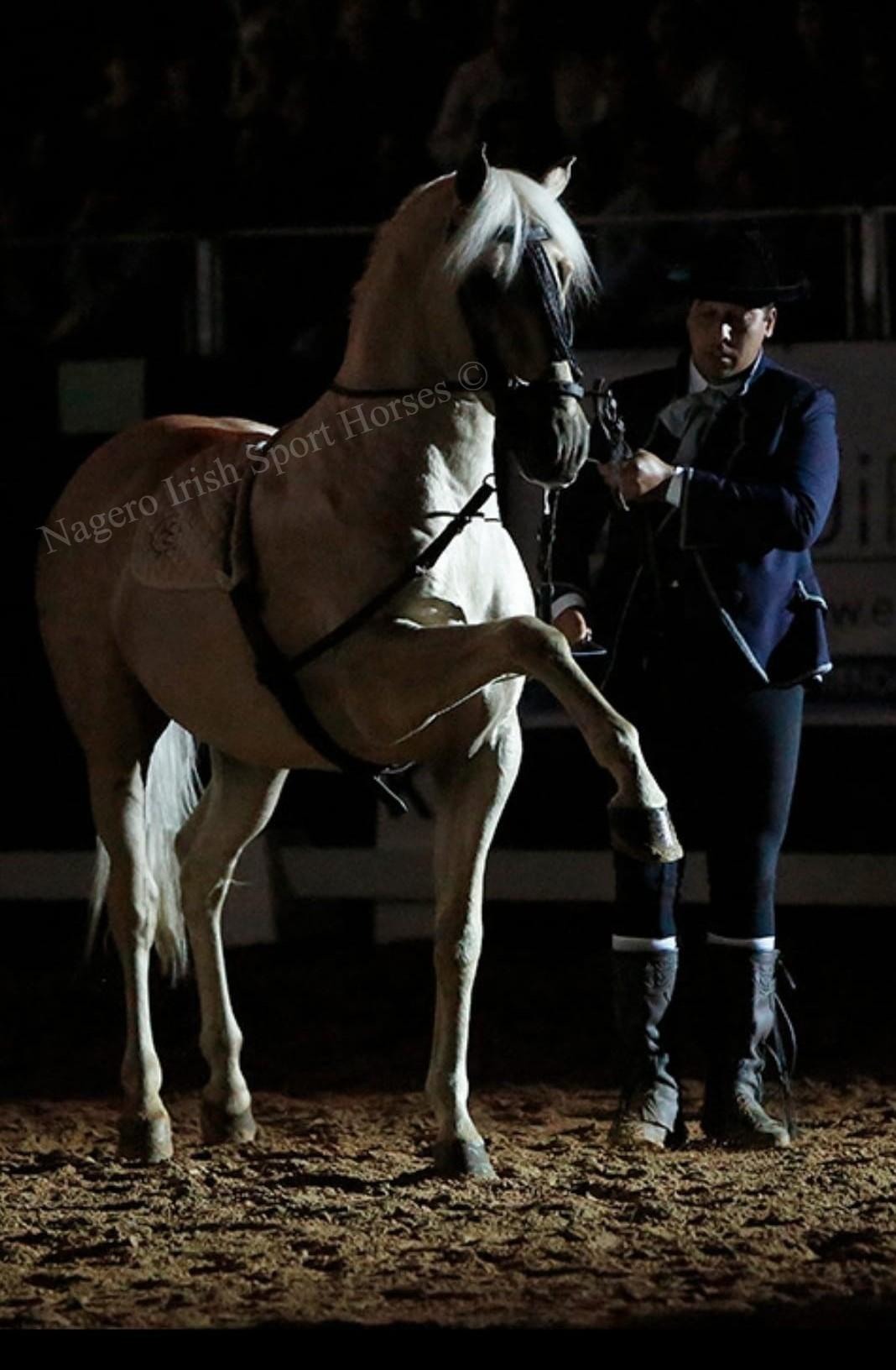 Stunning high school Stallion 2