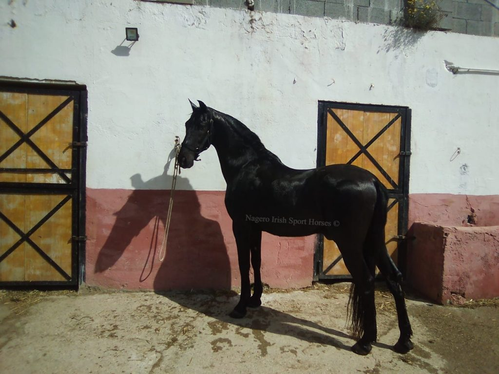 Black Beauty!!