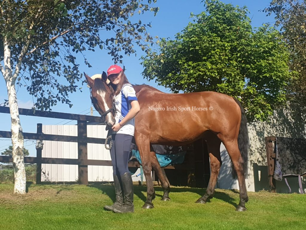 15.2hh Child-Adult Competition Horse