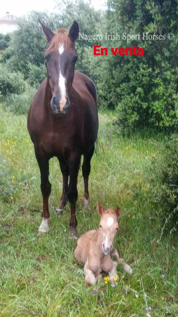 Top Quality Breeding Opportunity