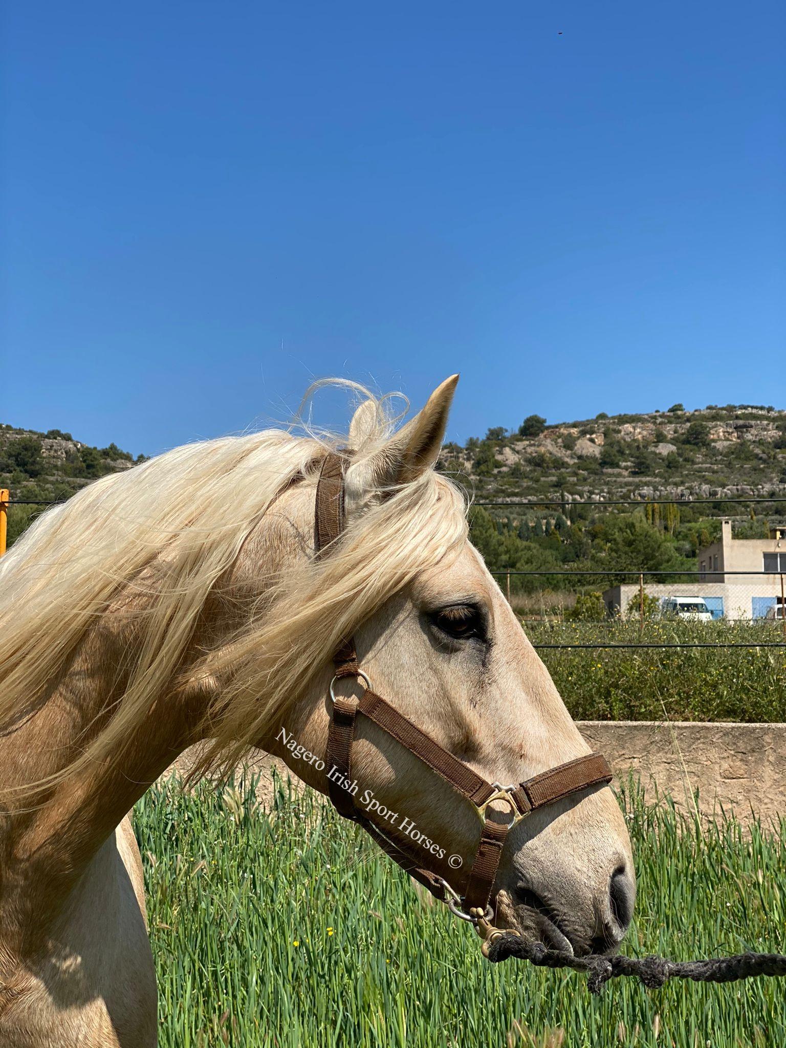 Beautiful Baroque horse 3