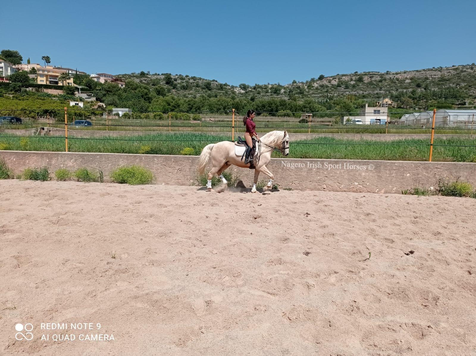 Beautiful Baroque horse 5