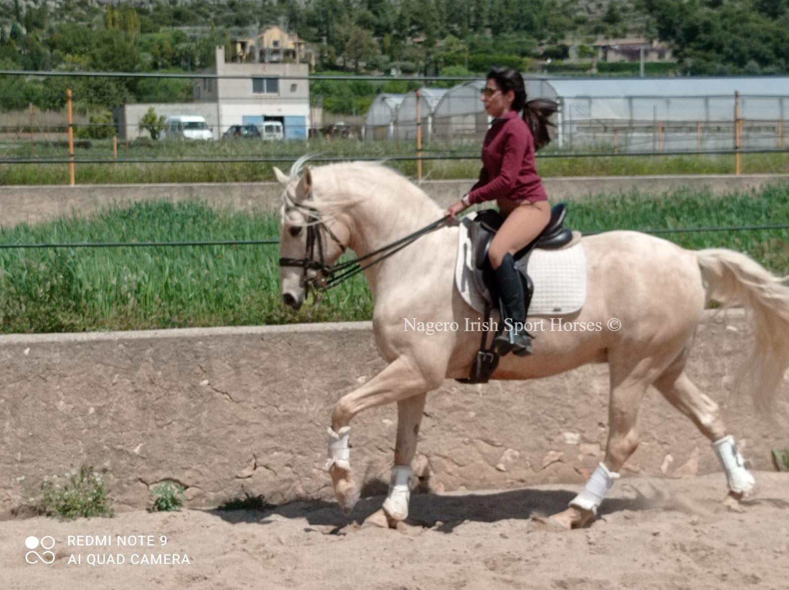 Beautiful Baroque horse