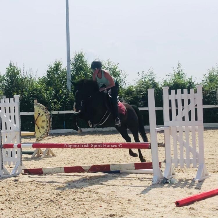 Super 15.2hh 5 year old